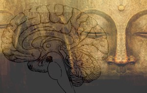 Yoga cerebro